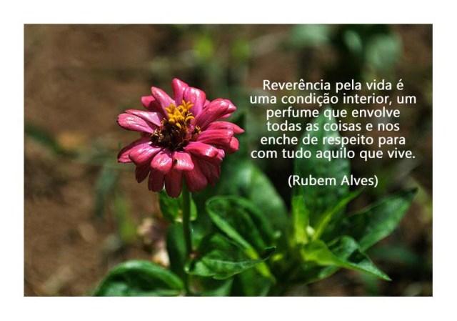 012-mensagem Rubens Alves.jpg